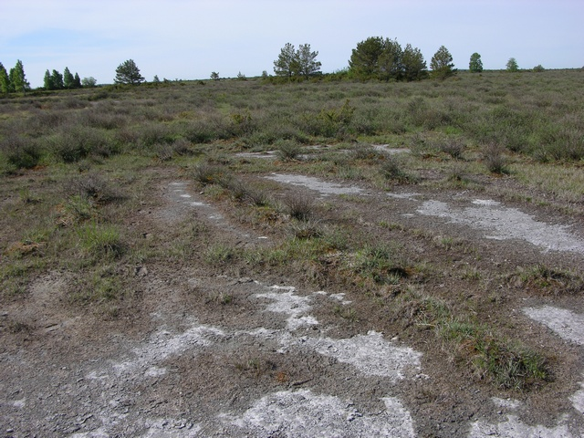 Alvar, pavement barren, limestone pavement
