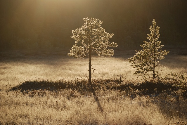 Autumn in Northern Finland photo
