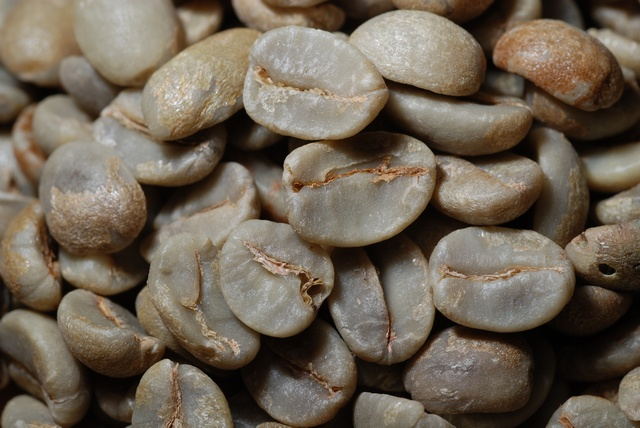 Coffee (Coffea sp.) photo