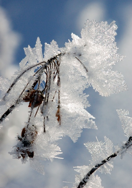 Ice crystal photo