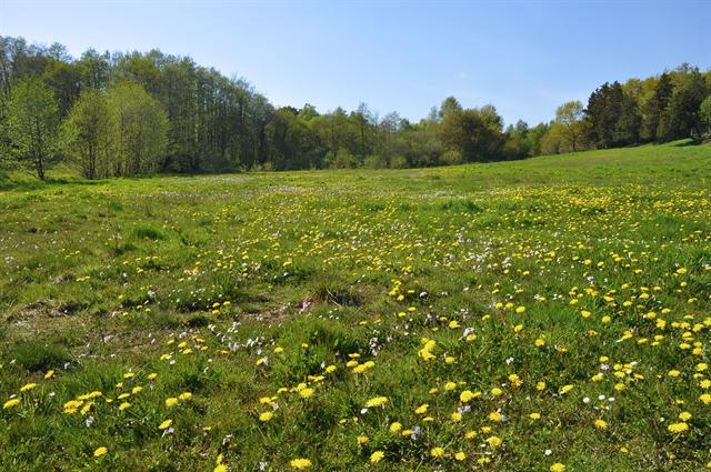 Meadow photo