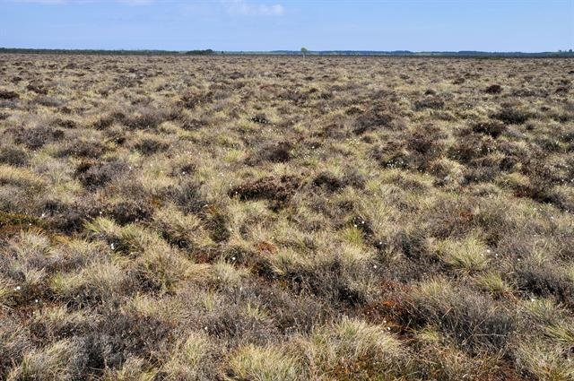 Raised bog photo