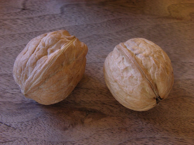 Walnut (Juglans regia) photo